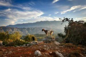Kreta erleben