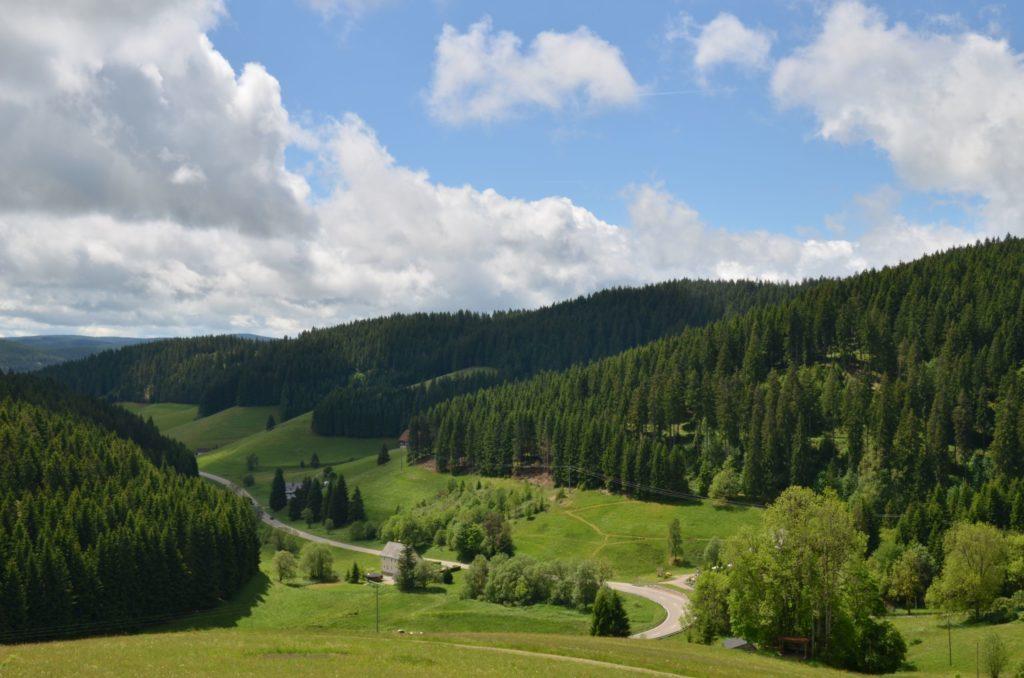Schwarzwald, lizensiert bei Adobe Stock